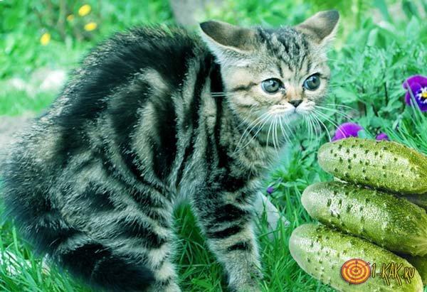 Кошка ненавидит эти зеленые овощи