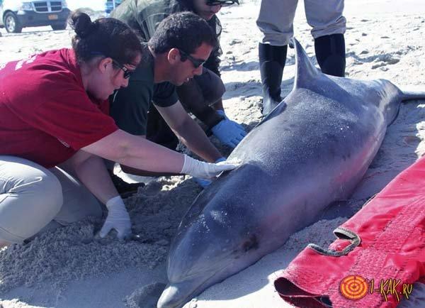 Люди помогают дельфинам
