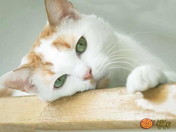 Довольная кошка