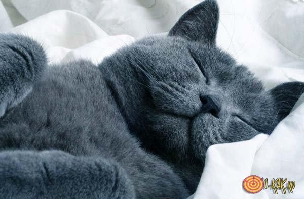 Кот мурлыкает от наслажения