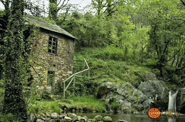 Дом в лесу помогает ориентироваться