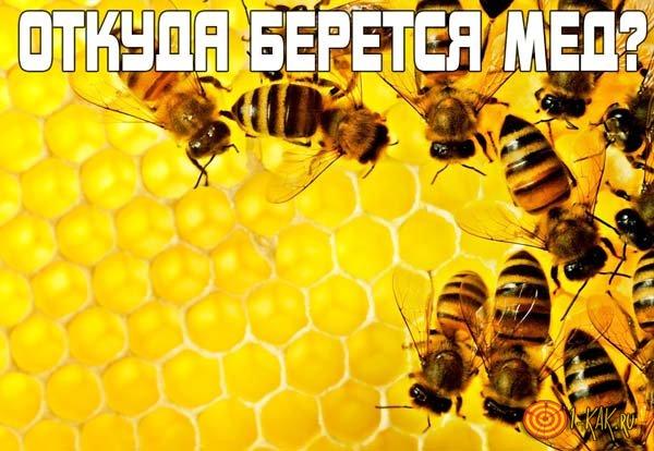 Откуда берется мед и как делается