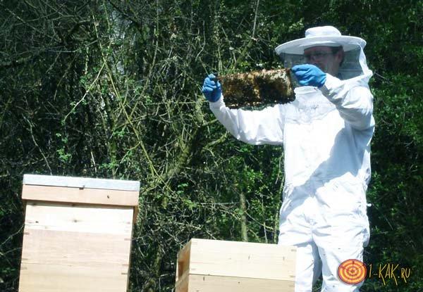 Пчеловод и процесс сбора меда с ульев