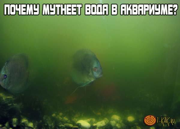 Почему может мутнеть вода в аквариуме?