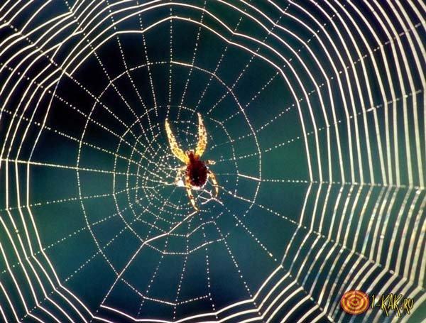 Лучше не убивать паука