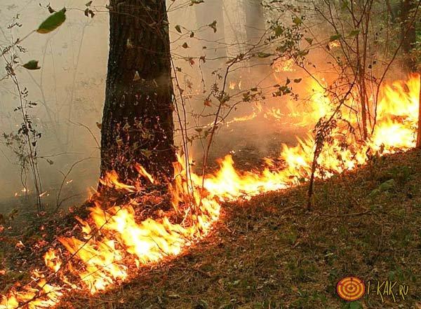 Большой пожар в лесу