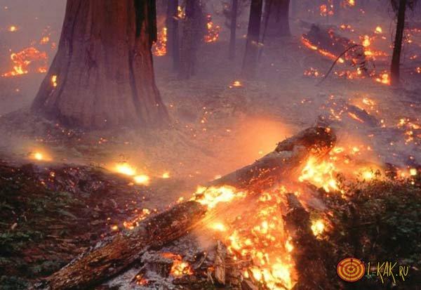 Тлеющие угли лесного пожара