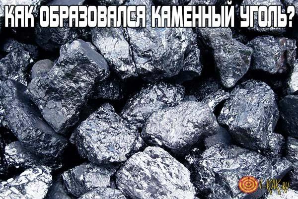 Как появился каменный уголь?
