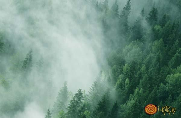 Тайга в тумане