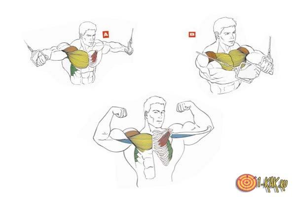 Инструкция, как правильно накачать грудные мышцы: порядок действий