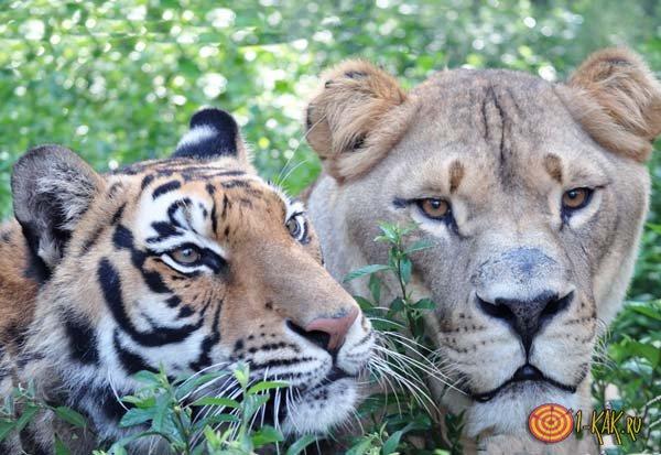 Опасный хищники в джунглях