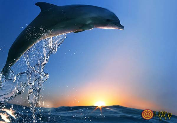 Сон про дельфина увидела будущая мать