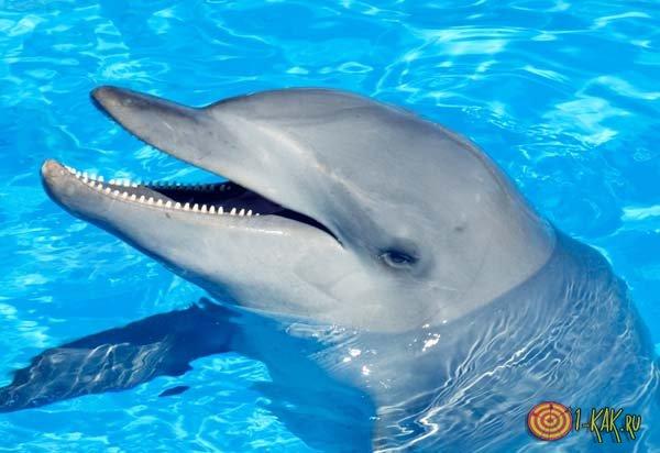 Что говорится в сонниках про дельфинов