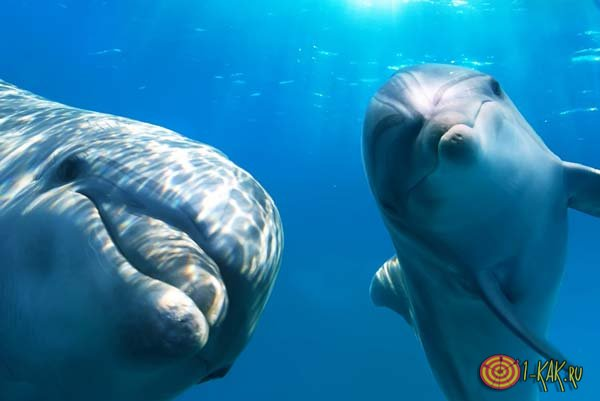 Дельфины плавают в море