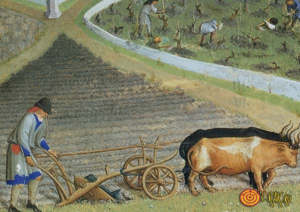 Земледелие в средневековье
