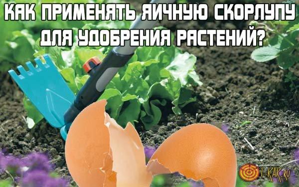Как применять яичную скорлупу для удобрения растений?