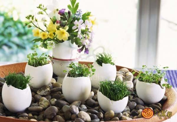 Комнатные растения получают удобрение от скорлупы