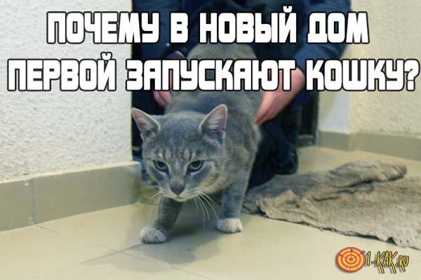 Зачем запускают кошку в новую квартиру?
