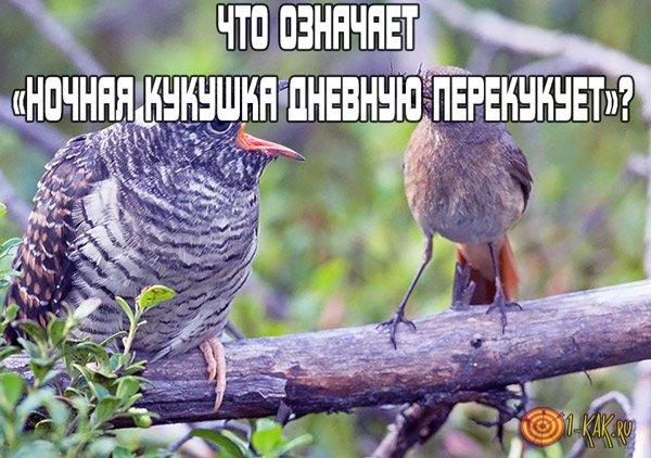 Что означает «Ночная кукушка дневную перекукует»?
