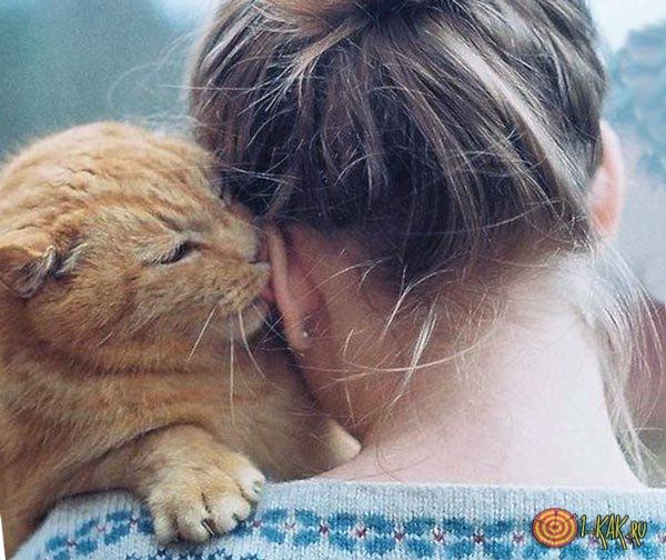 Кошка лижется на плече хозяйки