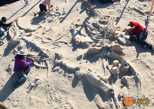 Палеонтологи занимаются останками ящеров