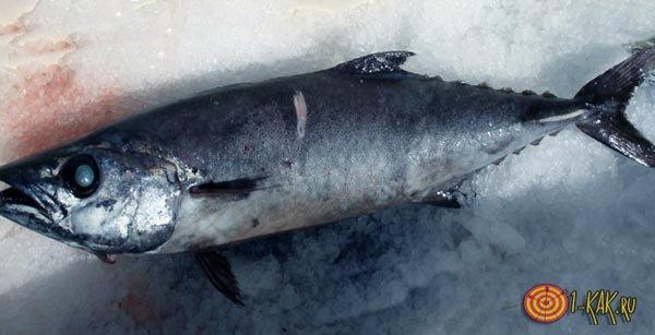 Эсколар - рыба