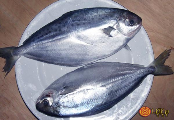 Две рыбьи тушки
