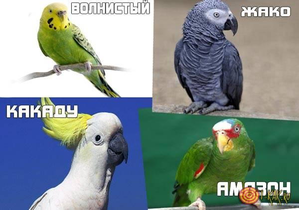 4 вида, лучше всего говорят