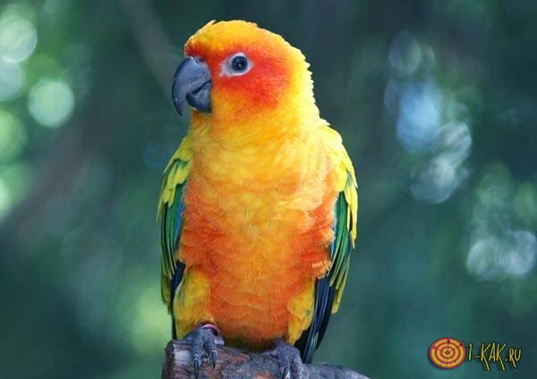 Такого попугая говорить научить сложно
