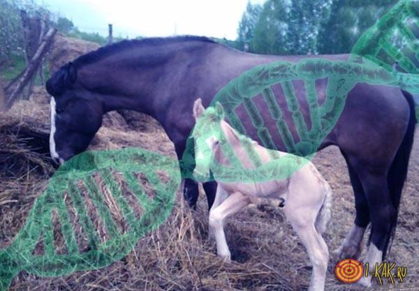 Теория о животных и потомстве
