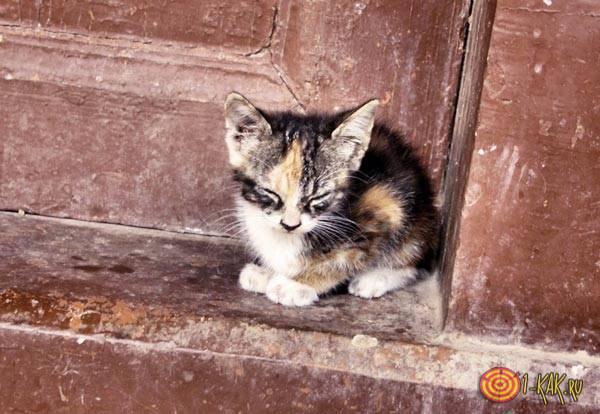 Маленький котенок, никого нет у него
