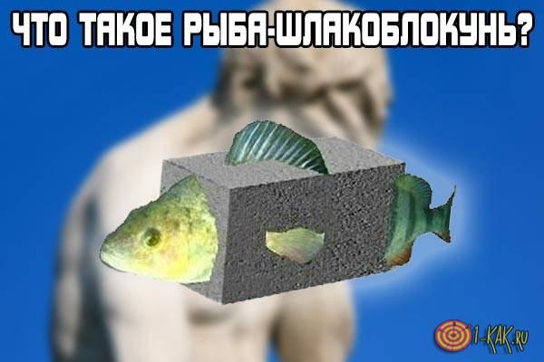 Что за рыба шлакоблокунь?