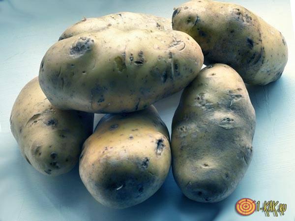 Следы проволочника в картофеле