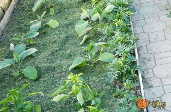 Почва и кокосовое удобрение