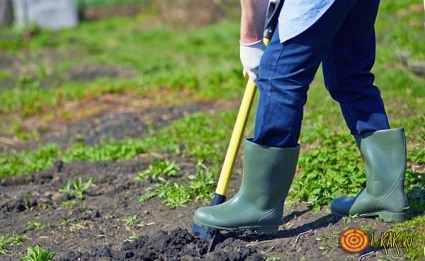 Вскапывает почву