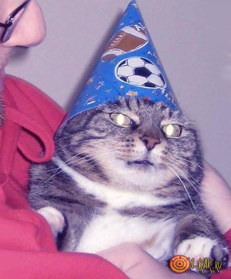 Оригинальное изображение кота