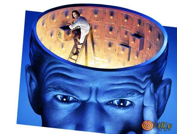 Как устроен мозг и запоминание