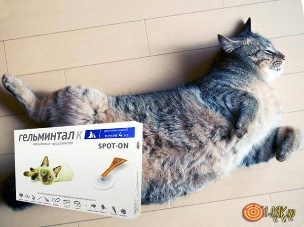 Препарат от глистов для кошек