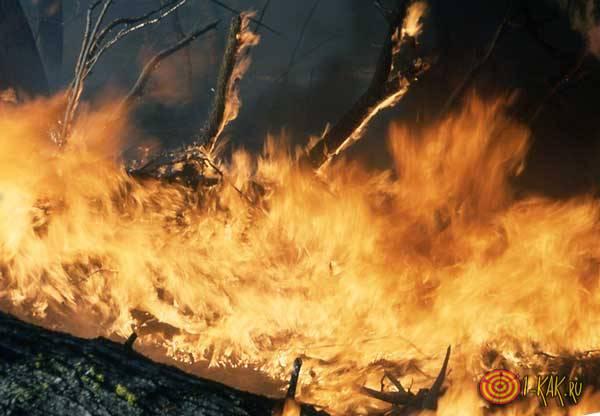 Сильным огнем объяты деревья