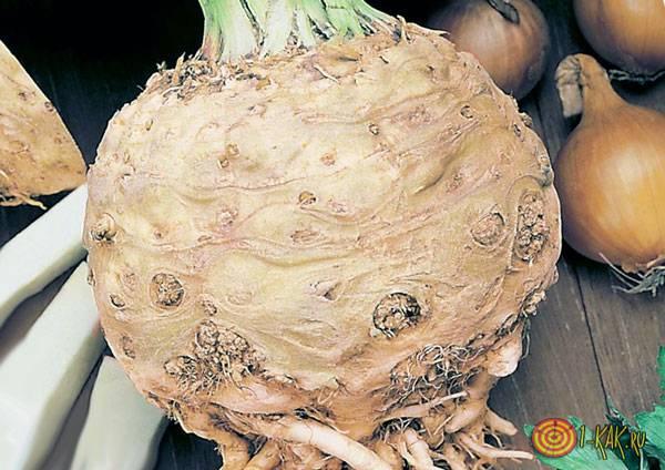 Сердцевина растения
