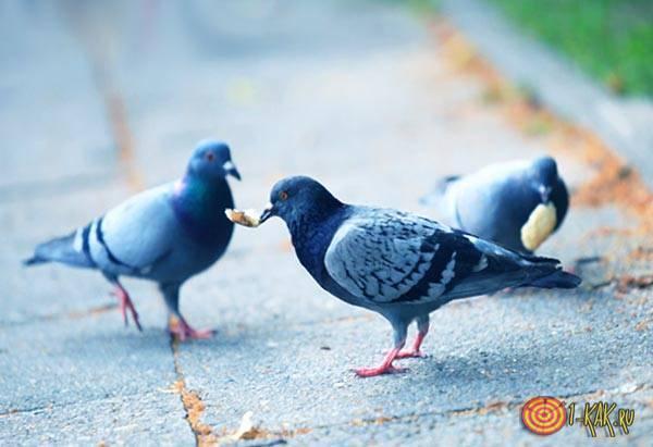Птицы мира на тротуаре