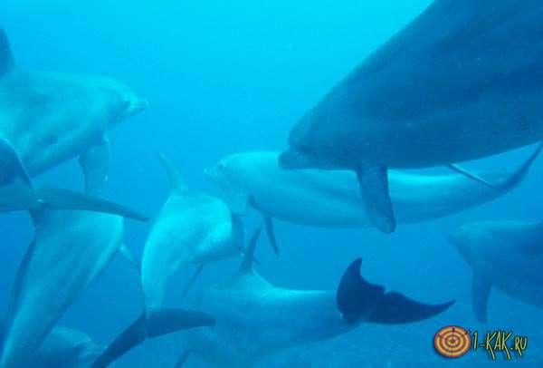 Китовые в море