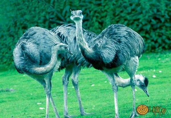 Самые крупные птицы