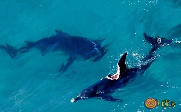 Нападение на акулу