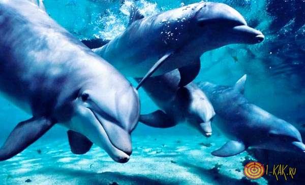 Стая дельфинов атакует