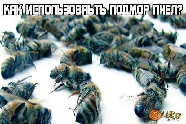 Подмор пчел: как использовать, как пить настойку