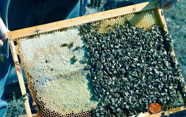 Улей после жизнедеятельности пчелы