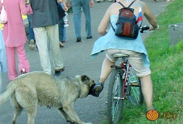Нападение животного на ездока