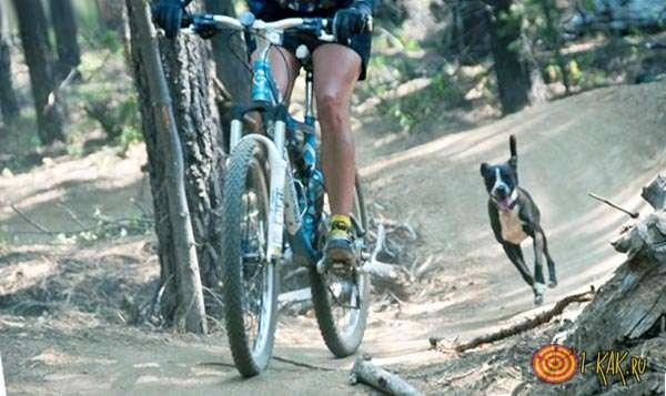 Пес бежит рядом