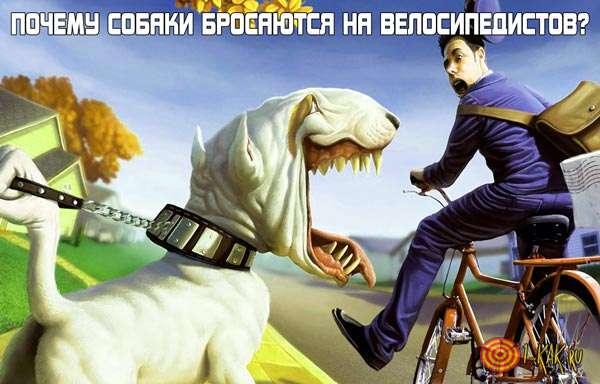 Почему собаки нападают на велосипедистов?